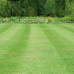 Lawn Removal Service – Auckland